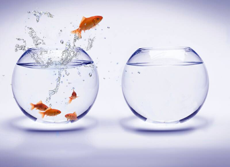 Picture of fish jumping from one bowl to the other